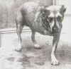 Alice In Chains - Alice In Chains (Import)